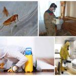Профессиональная обработка помещения от блох