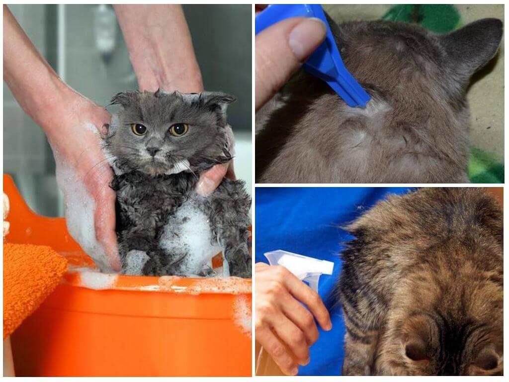 Обработка кошки от блох
