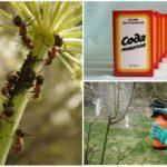 Обработка растений содовым раствором