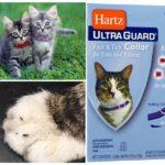 Ошейник Хартц от блох для котят