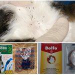 Ошейники от блох для защиты кошек