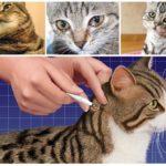 Возможные недомогания у кошки если она слижет капли от блох