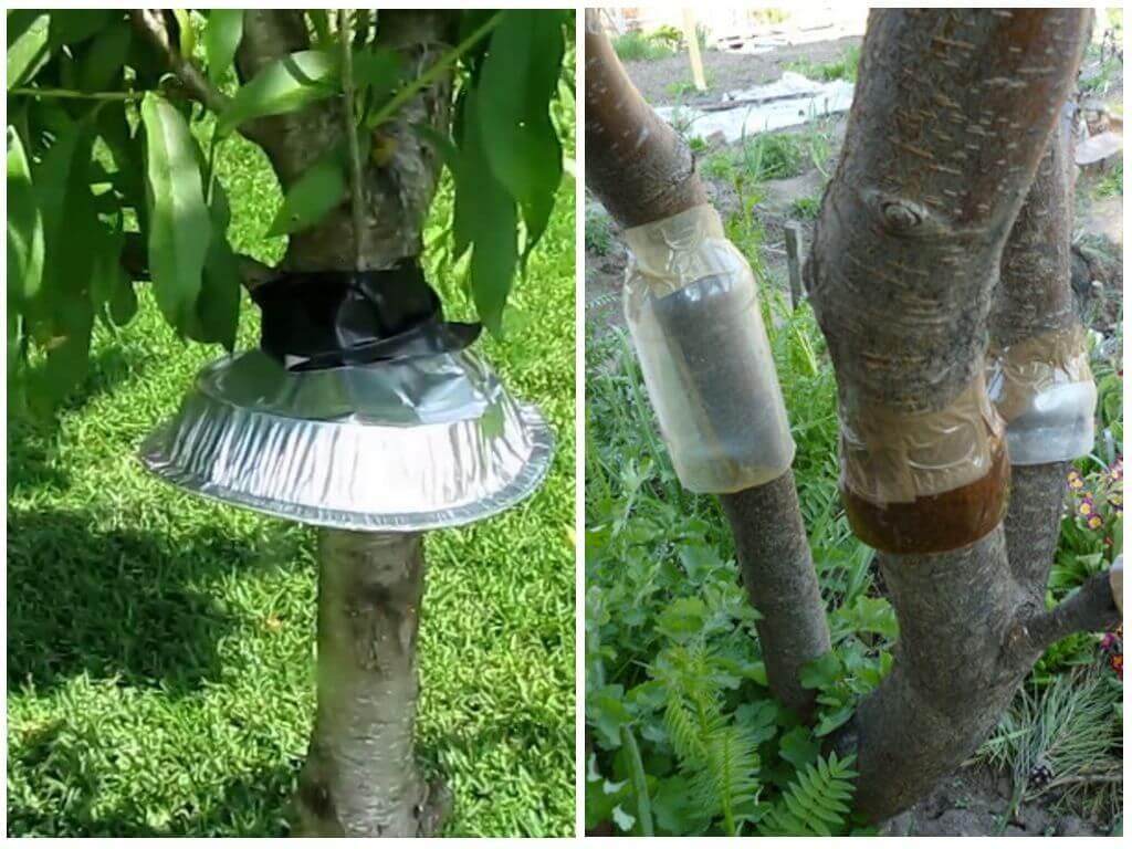 Ловушки от муравьев для защиты деревьев