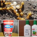 Препараты для борьбы с насекомыми на даче