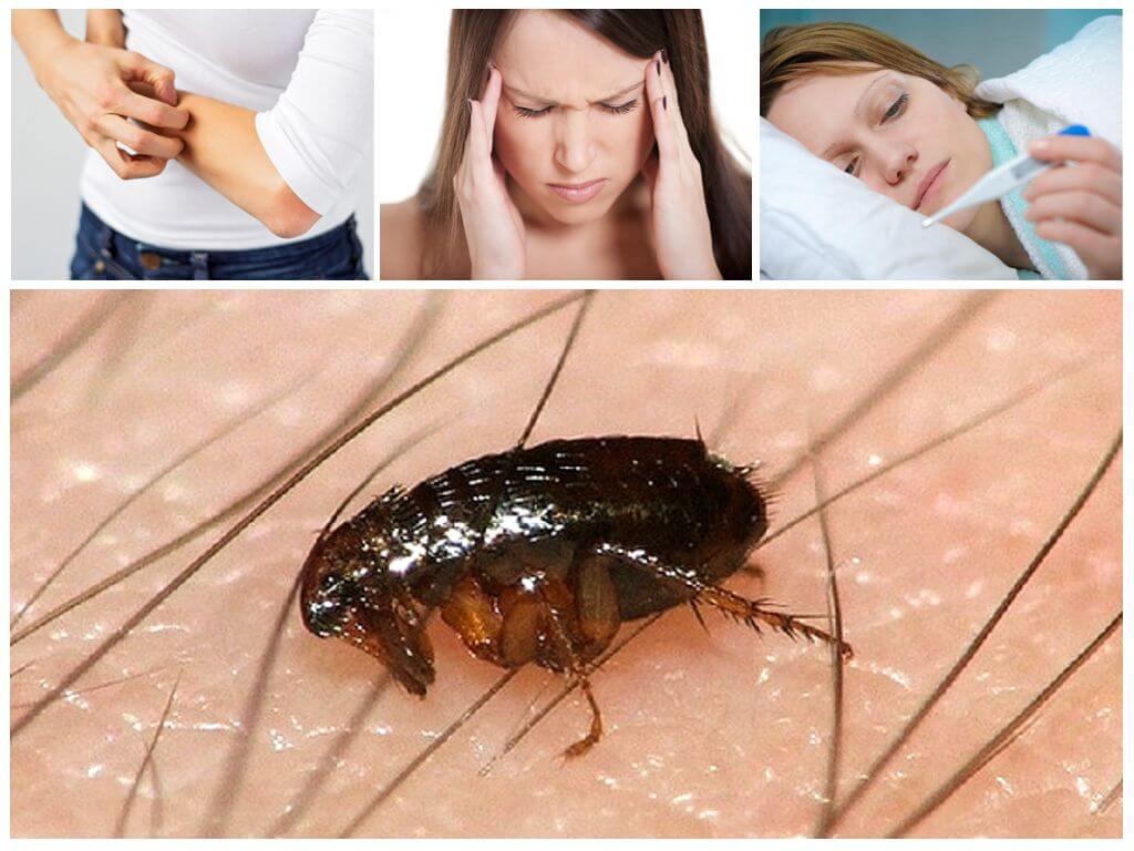 Последствия укусов насекомых