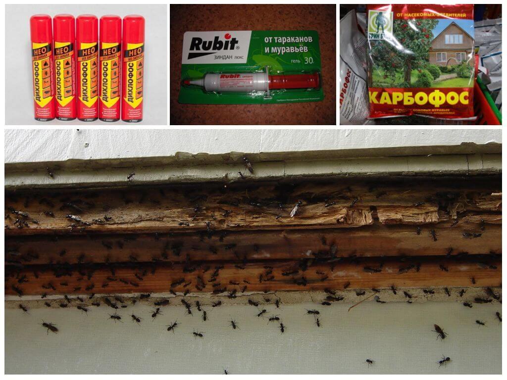 Профессиональные средства от муравьев