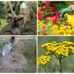 Способы уничтожения насекомых