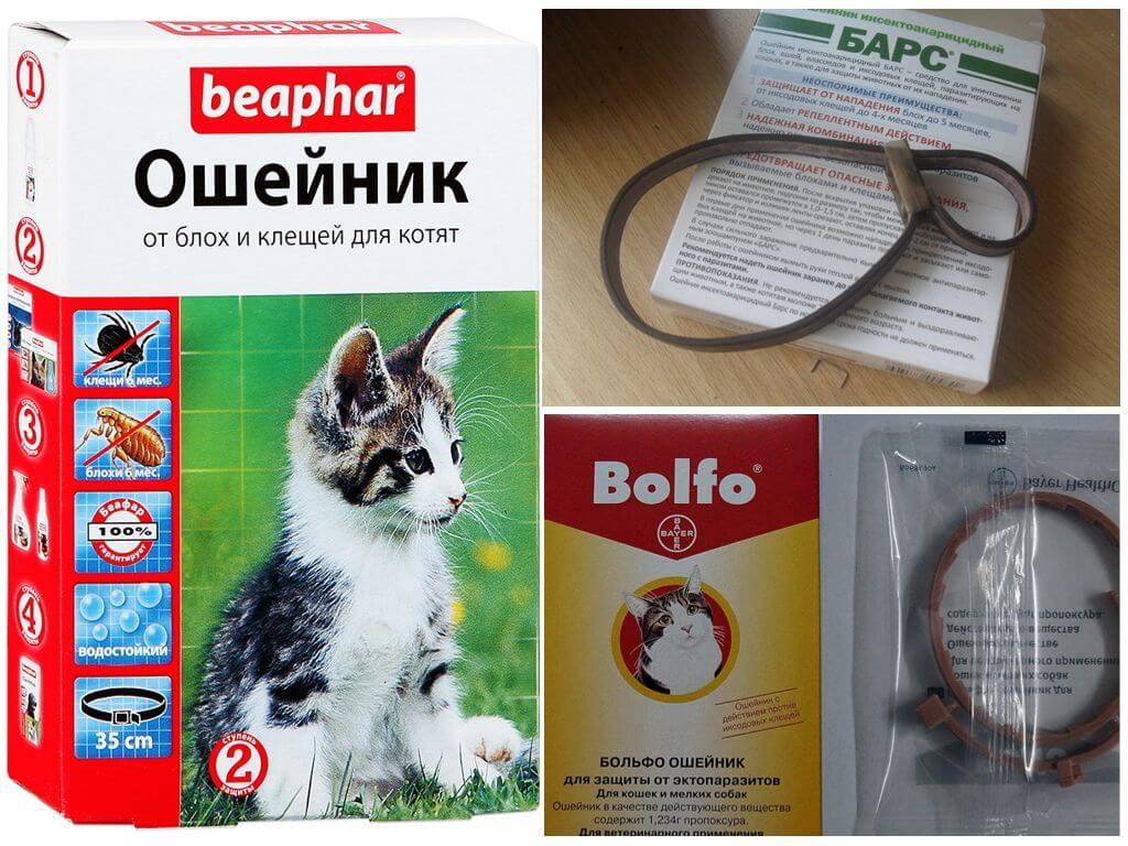 Противопаразитные ошейники для котят