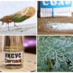 Народные методы борьбы с травяными блохами