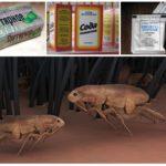 Народные методы борьбы с насекомыми