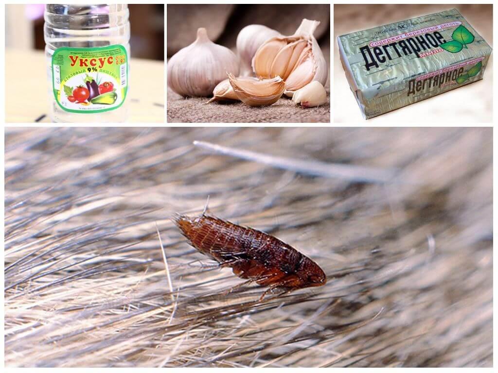 Народные рецепты для борьбы с насекомыми