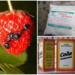 Народные рецепты от муравьев на клубнике