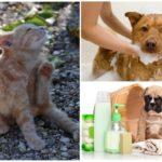 Антипаразитарные шампуни для домашних животных