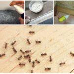 Способы выведения рыжих муравьев
