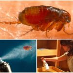 Спреи для борьбы с насекомыми