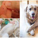 Спрей для обработки собаки от блох