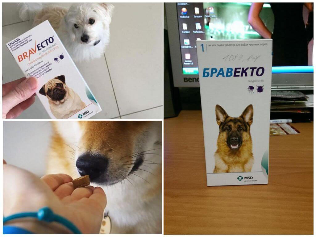 Таблетки Бравекто для собак