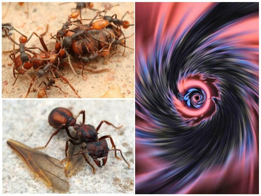 Телепортация муравьев атта