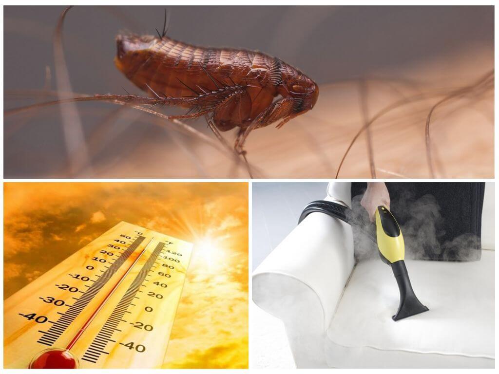 Температурное воздействие на паразитов