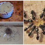 Ловушки для муравьев своими руками
