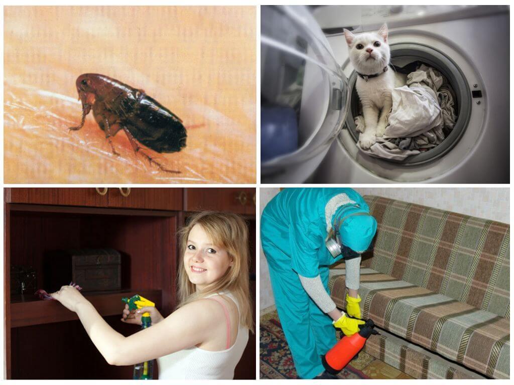 Уничтожение паразитов в доме