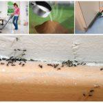 Способы борьбы с муравьями