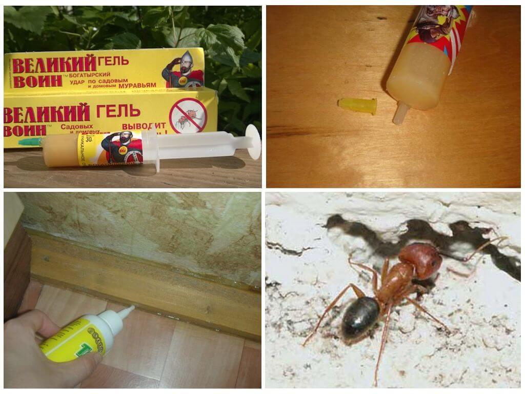 Применение геля против муравьев