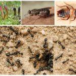 Внутренние враги муравьев