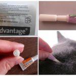 Применение Адвантейдж для кошек