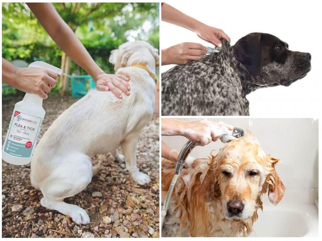Обработка собак от блох