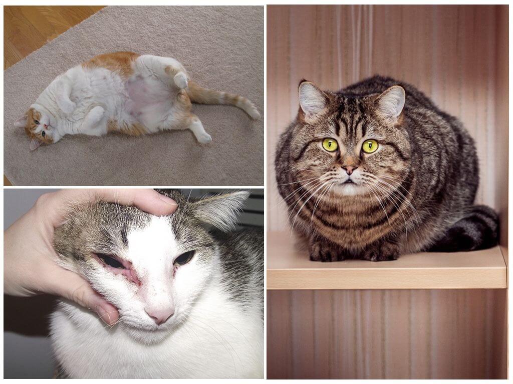Причины зуда у кошки