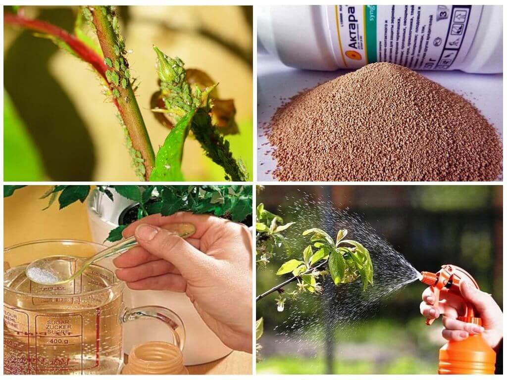 Использование препарата для борьбы с насекомыми