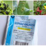 Использование борной кислоты против тли