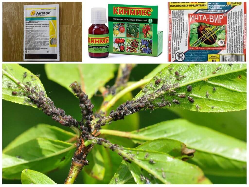 Химические средства для борьбы с насекомыми