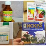 Химические препараты для уничтожения насекомых