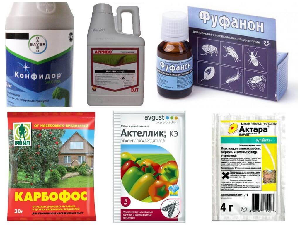 Химикаты для уничтожения тли