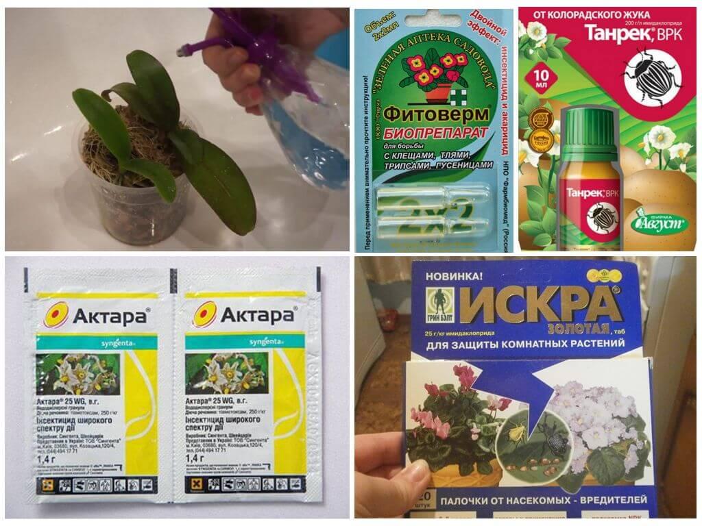 Инсектицидные средства против тли