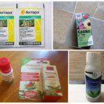 Препараты для борьбы с тлей