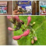 Инсектициды против тли