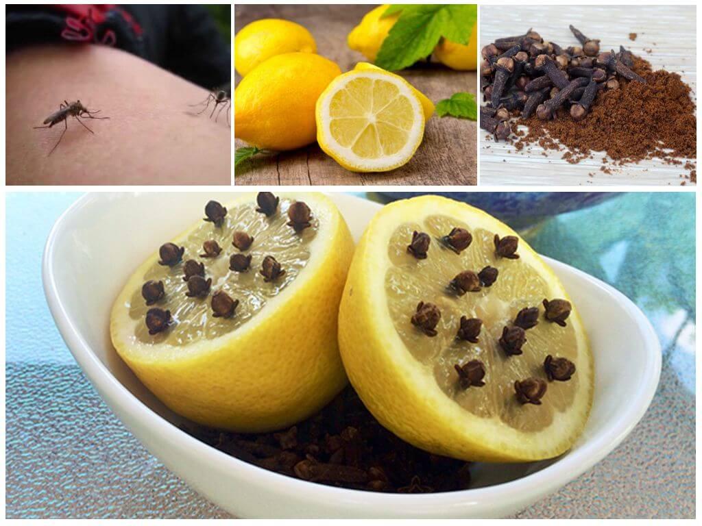 Лимон и гвоздика против комаров