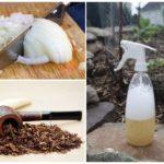 Народные средства для борьбы с вредителями