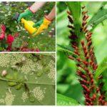 Обработка растений от насекомых