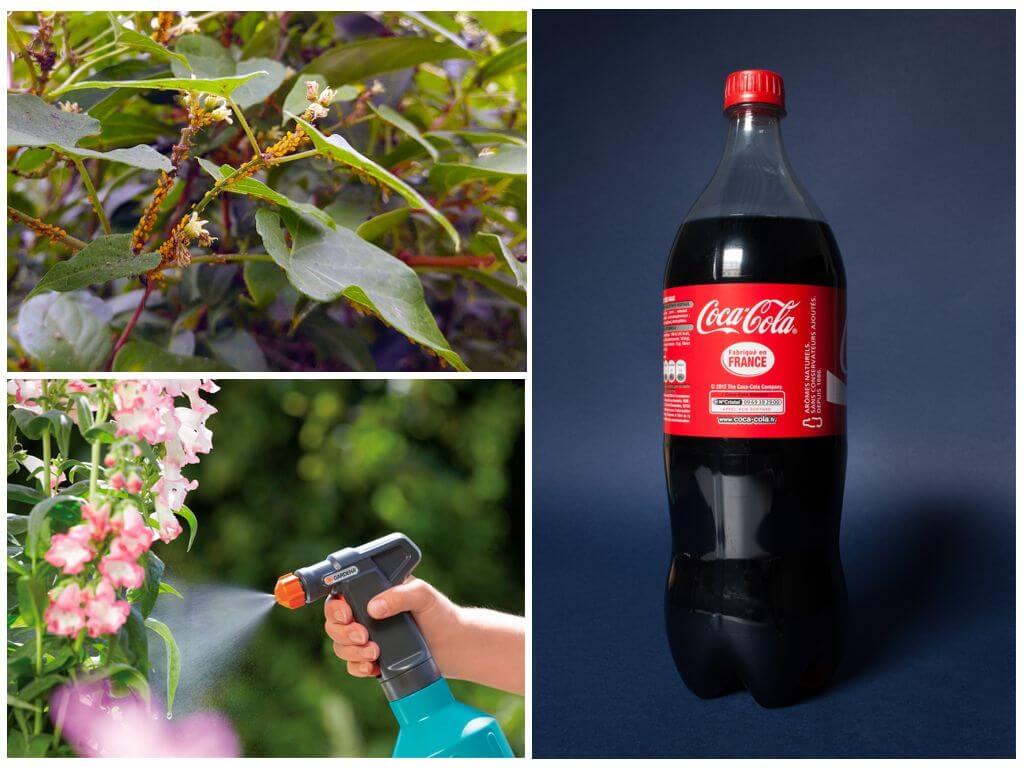Обработка растений Кока-Колой