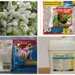 Инсектицидные препараты против тли