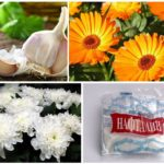 Отпугивание вредителей с помощью запахов