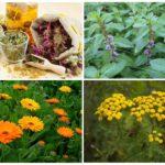 Отвары трав для борьбы с насекомыми