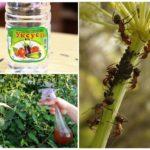 Использование уксуса для борьбы с насекомыми