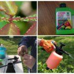 Использование зеленого мыла для борьбы с насекомыми