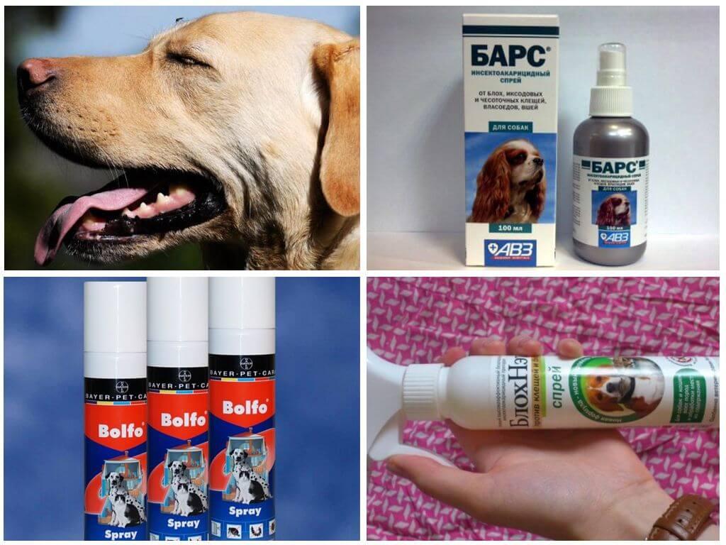 Спреи для защиты собак от комаров