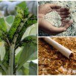 Табак и зола против тли
